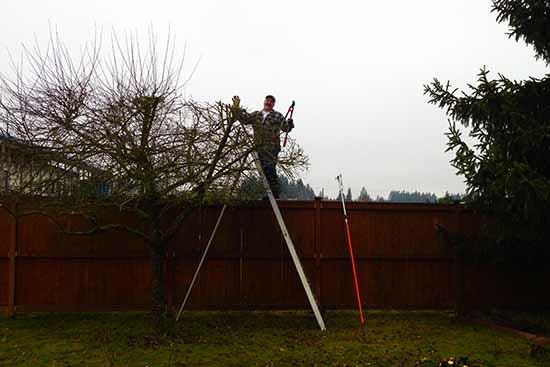 Tree Service and pruning buckley tacoma lake tapps, enumclaw